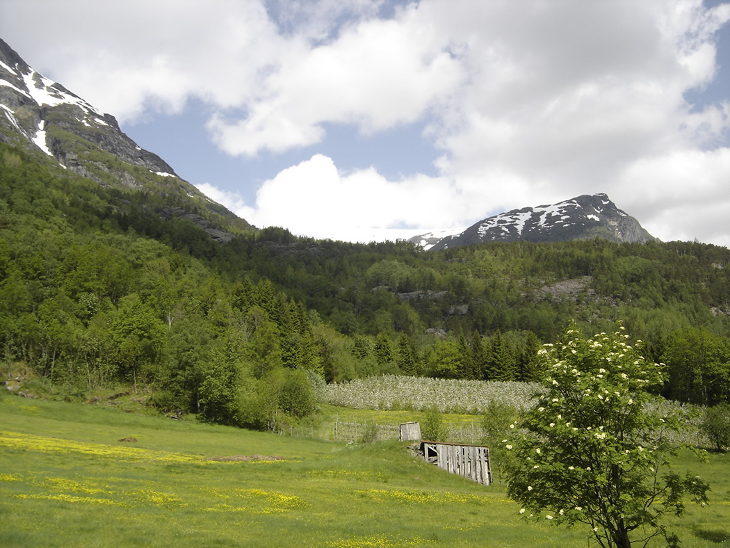 Balen toward Balen with hay-pole shed, flowering - © Anne Gullbjørg Digranes
